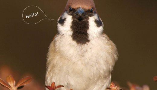 知っているようで知らない隣人(鳥)「こんにちはスズメ」