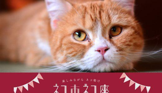 楽しみながらネコ助けする🐾 ネコ市ネコ座 7/14〜16
