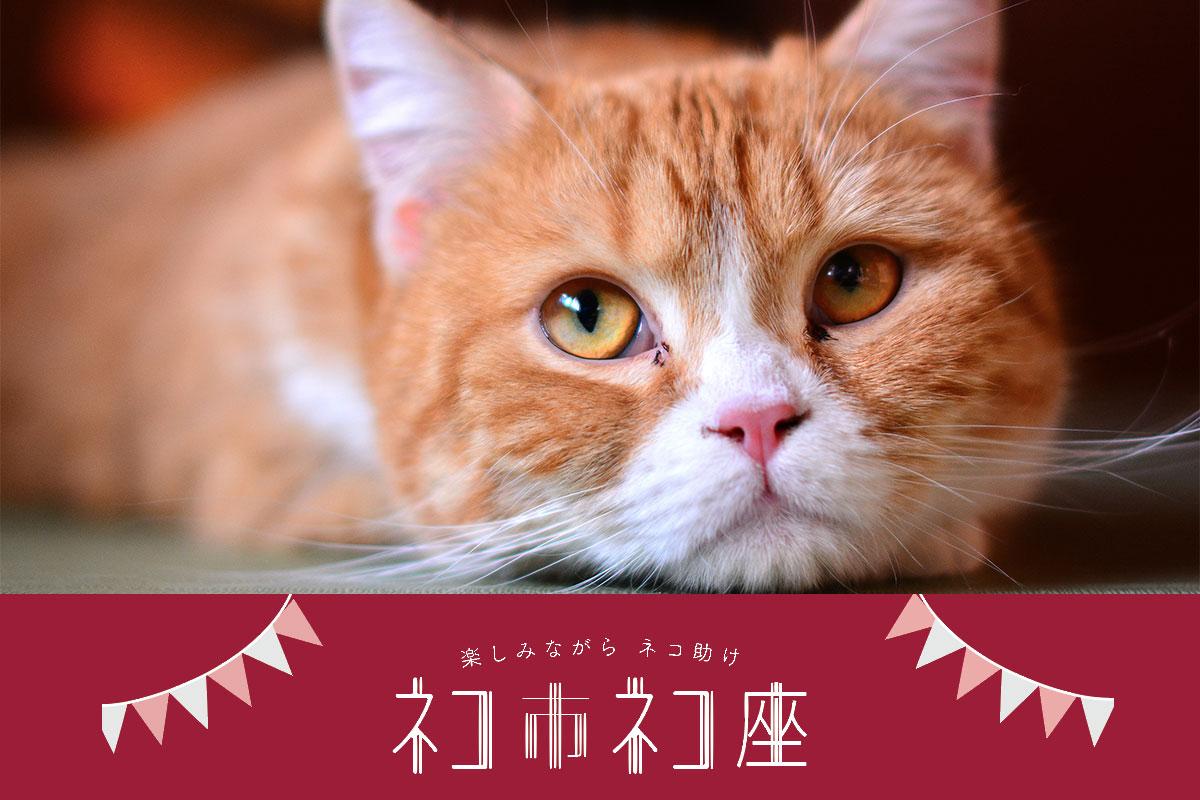 楽しみながらネコ助け ネコ市ネコ座