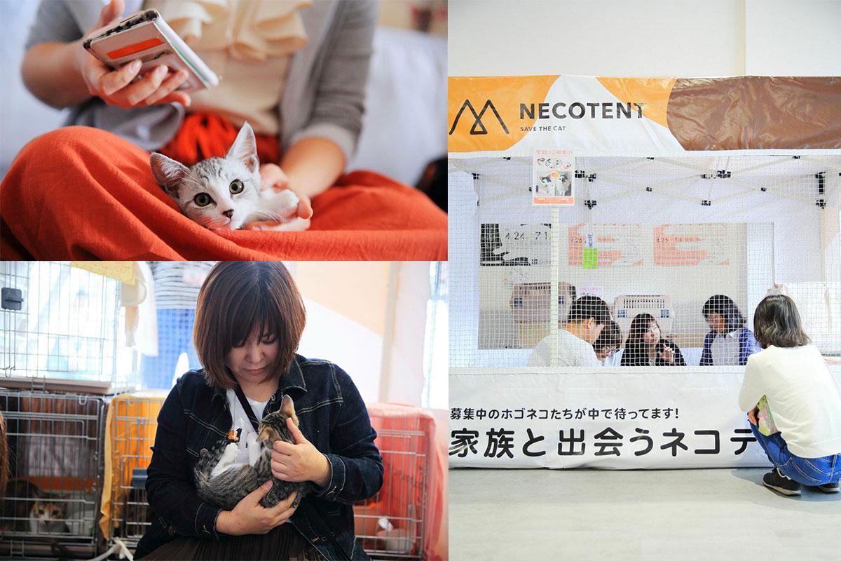 保護猫譲渡会のための「NECO TENT(ネコテント)」