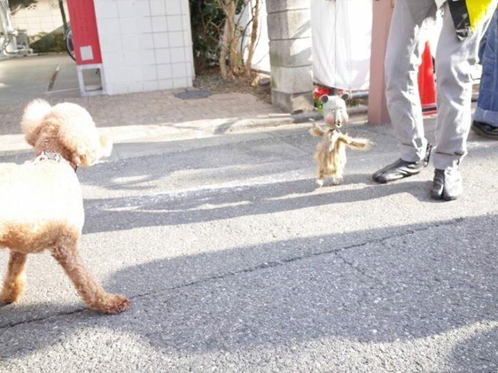 犬はちょっと怖いトートン