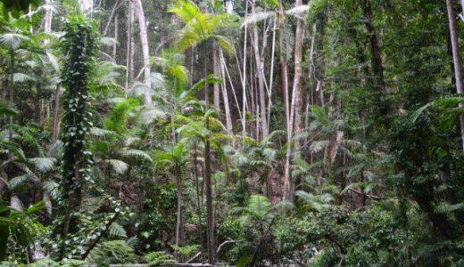 熱帯雨林の保護支援 / グアテマラ へのクリック募金