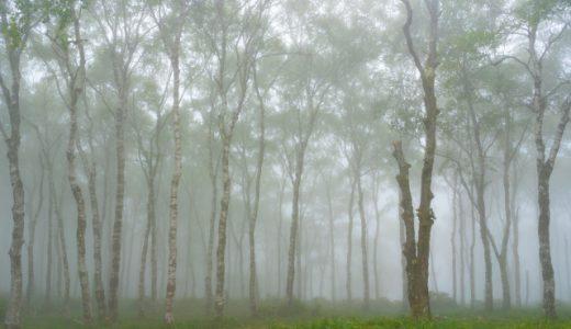 植樹による森林資源の育成 / カナダ へのクリック募金