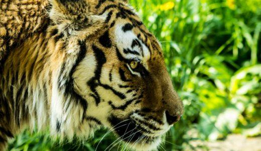 熱帯雨林の保全 / ペルーへのクリック募金