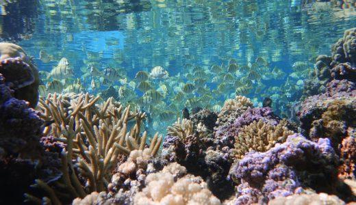 SNSで『今できる』ETVOSの環境保護キャンペーンで海を守ろう