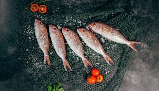 【クラウンドファンティング】食べて学んで、きれいな海と美味しい魚を未来に繫ぐ。
