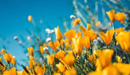 【国際女性デー】HAPPY YELLOWキャンペーンで幸せの黄色をSNSで投稿しよう。