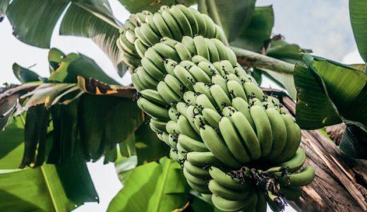 紙の資源にも目を向けよう。バナナで人も自然も笑顔に。